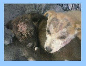 wounded puppies