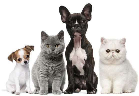 cats and dogs looking at you