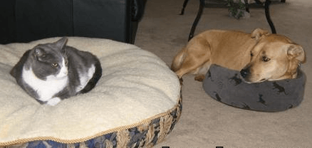 cat and dog sleeping on each others bed