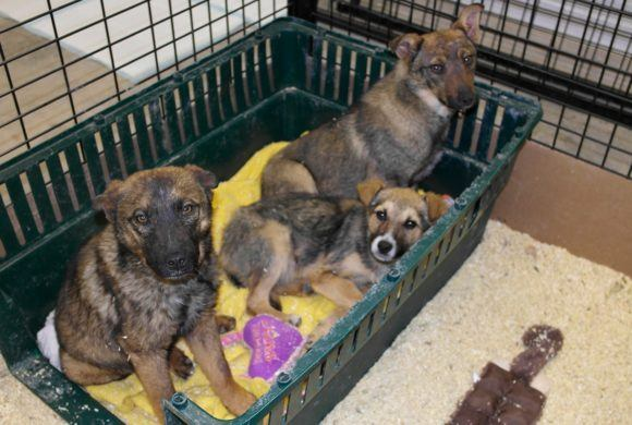 cute puppies waiting for a home