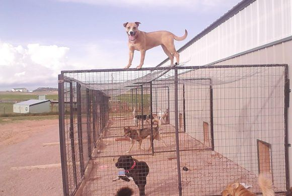 frisky dog on top of cage