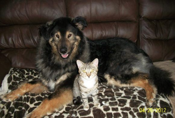 dog and cat sitting together on couch