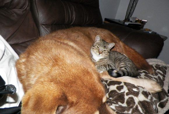 dog and cat sleeping together