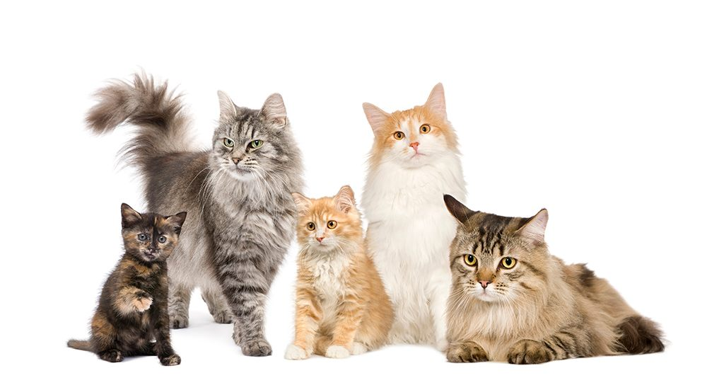 cats of all different kinds and ages