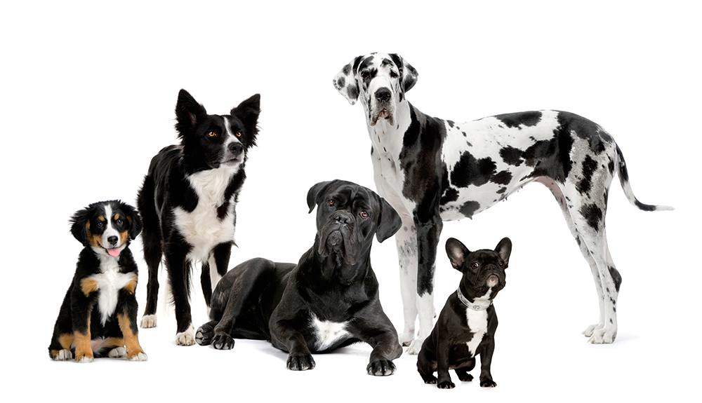 5 dogs all different breeds
