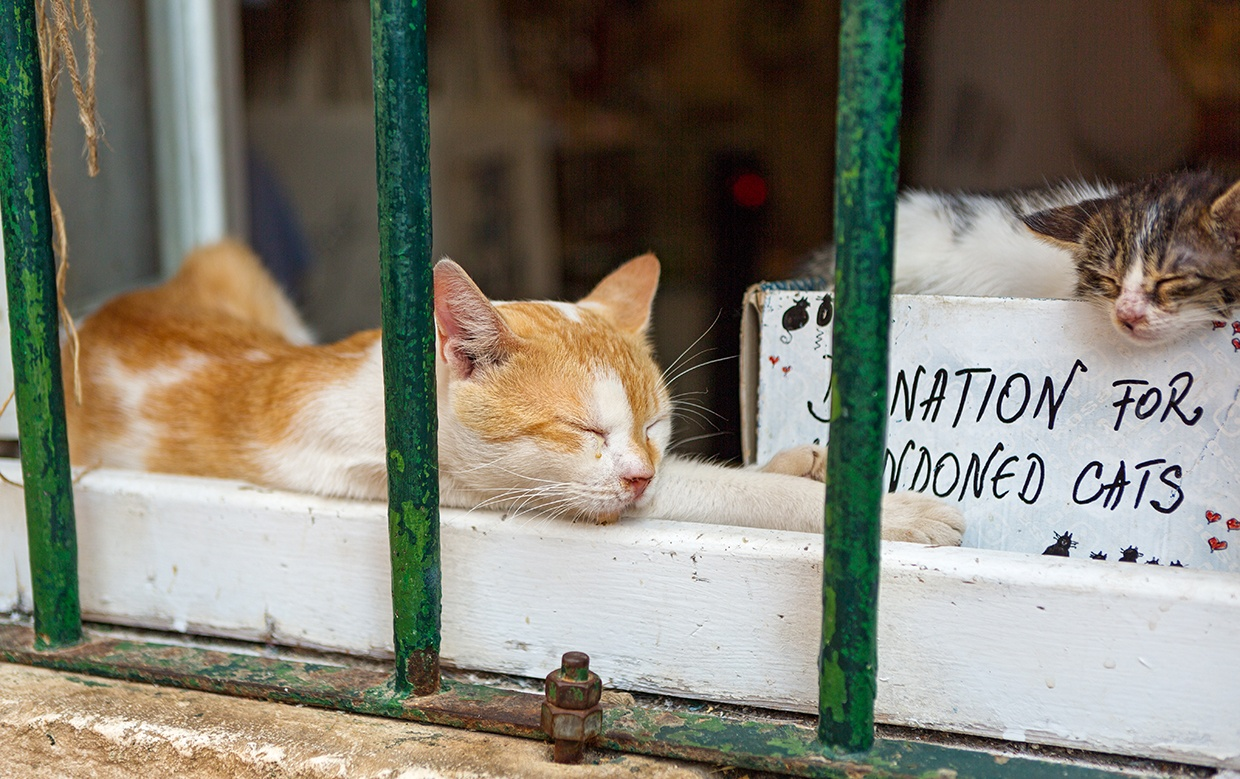 donations for abandon cats